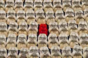 gummibarchen-fruit-gums-bear-sweetness-54633.jpeg
