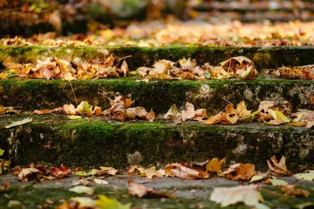 autumn leaves blur close up depth of field